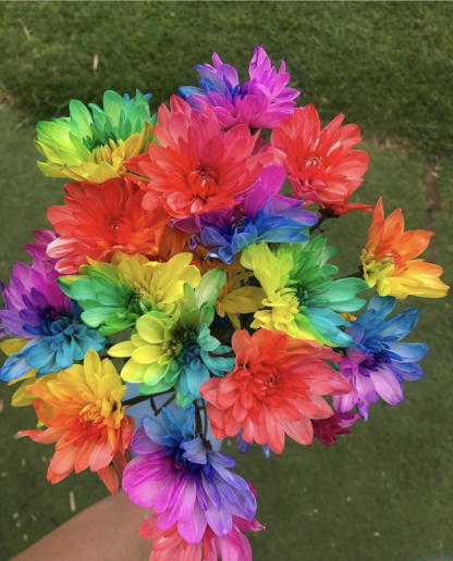 rainbow chrysanthemum flower subscription
